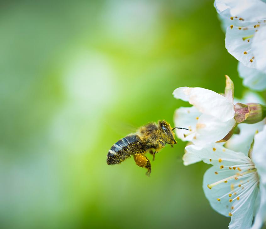 Bienen bei der two S GmbH